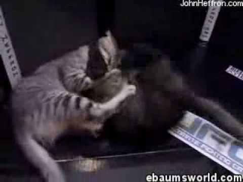 Ultimate Fighting Cats