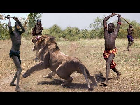Amazing Wild Animals Attacks – Wild Animal Fights Caught On Camera | Wild Animals Ultimate Fights