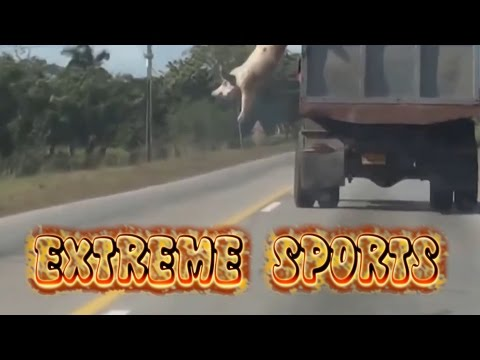 EXTREME SPORTS Video 17
